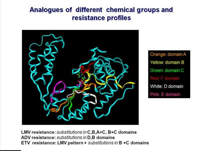 Gli analoghi nucleos(t)idici nella terapia dell'epatite cronica da HBV