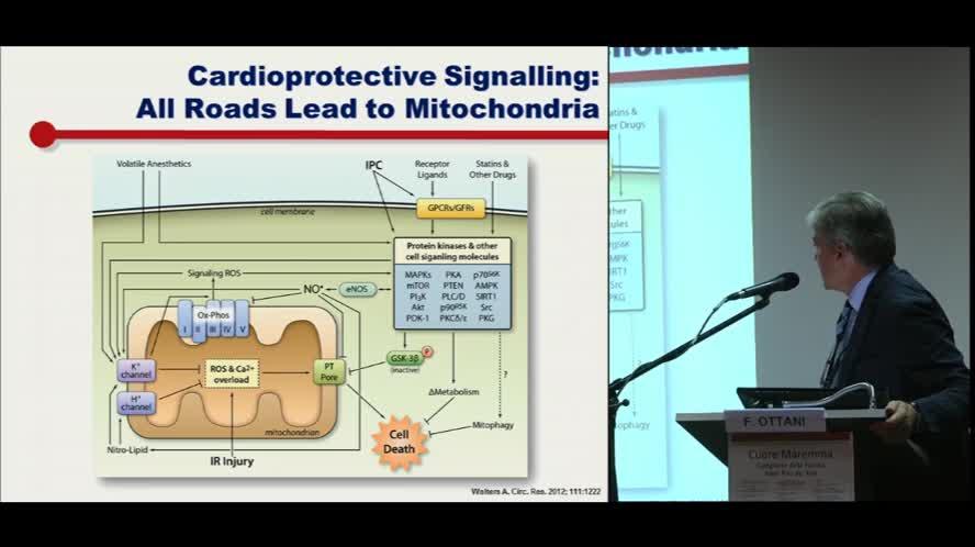 """Salvataggio miocardico """"beyond myocardial reperfusion"""""""